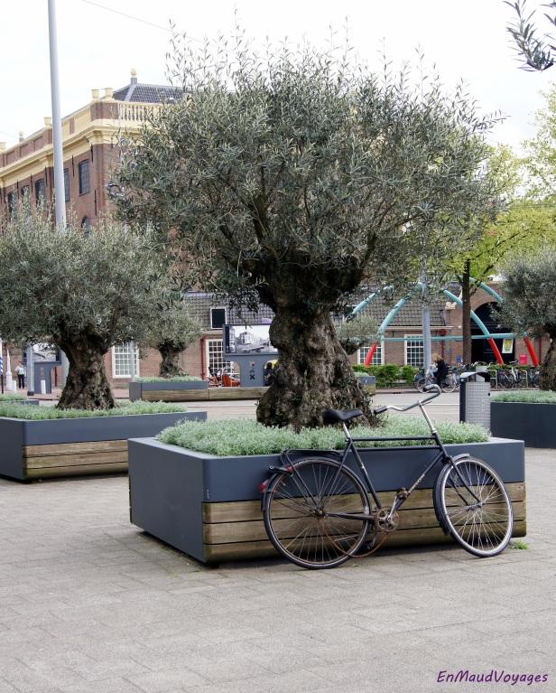 Au pied de l'olivier...