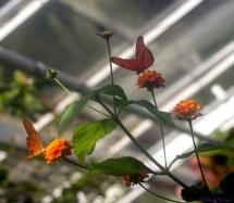 Jardin botanique - Serre aux papillons