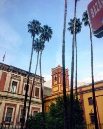 Palmiers des villes