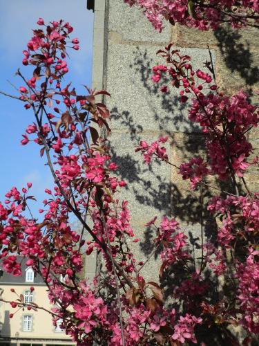Du rose à Cancale