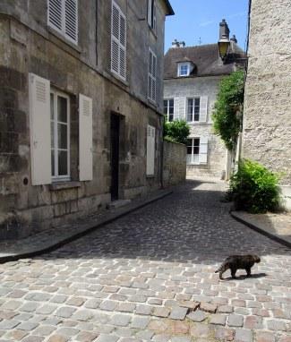 Ruelle et chat !