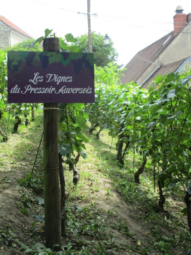 Les vignes d'Auvers