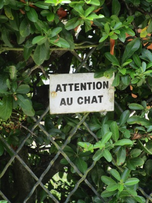 Chat d'attaque !