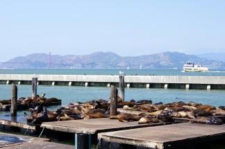 Les lions du Pier 39