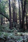 Des arbres et encore des arbresSONY DSC