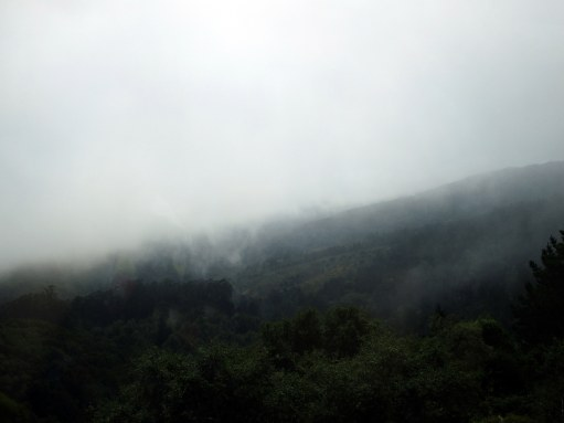 27. Muir Woods