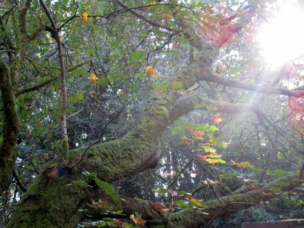 29. Muir Woods