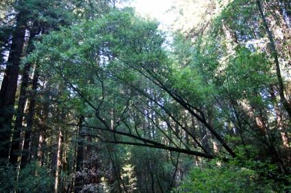 Des arbres et encore des arbres