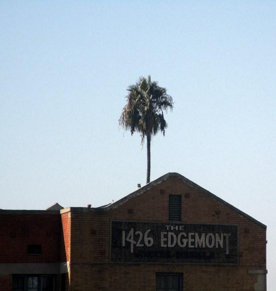 61. LA Sunset Bd