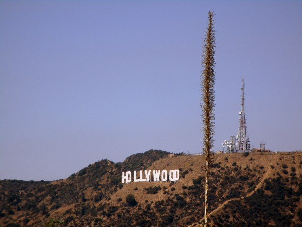 Hollywood !