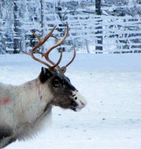 57. Laponie 2018 - Enontekio - EnMaudVoyages