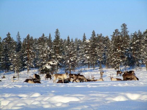 62. Laponie 2018 - Enontekio - EnMaudVoyages