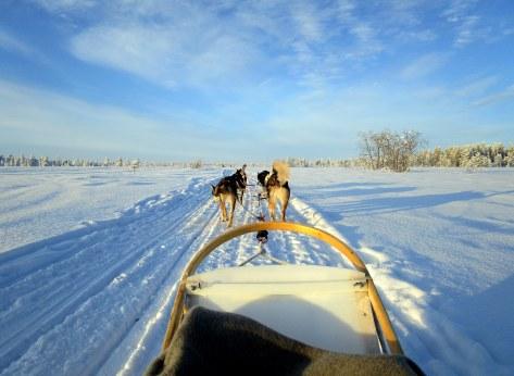 74. Laponie 2018 - Chiens de traineau - EnMaudVoyages