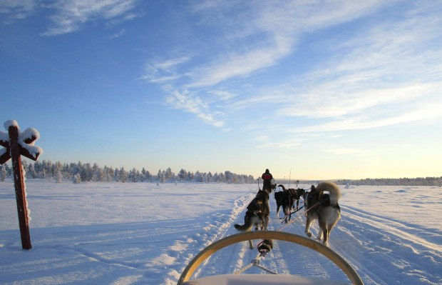 75. Laponie 2018 - Chiens de traineau - EnMaudVoyages