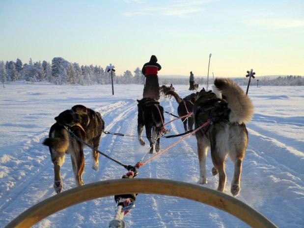 76. Laponie 2018 - Chiens de traineau - EnMaudVoyages