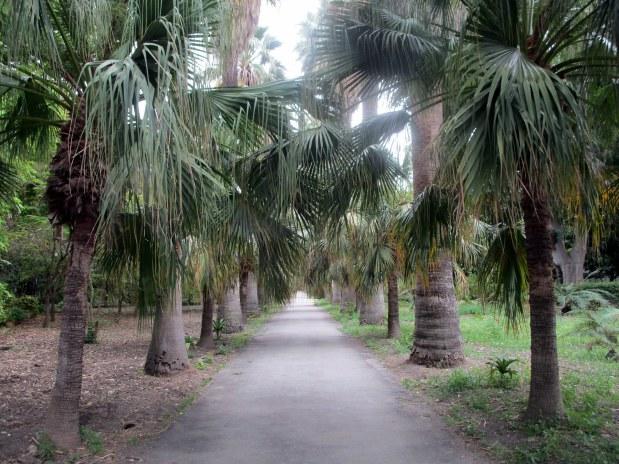 118. Sicile - Palerme - EnMaudVoyages- Jardin botanique