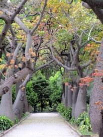 124. Sicile - Palerme - EnMaudVoyages- Jardin botanique