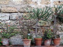 Jardin botanique Palerme